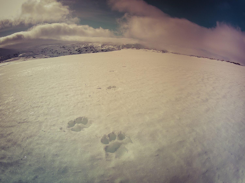 Trekking Lobo